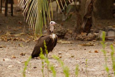 Bird Watching Vulture